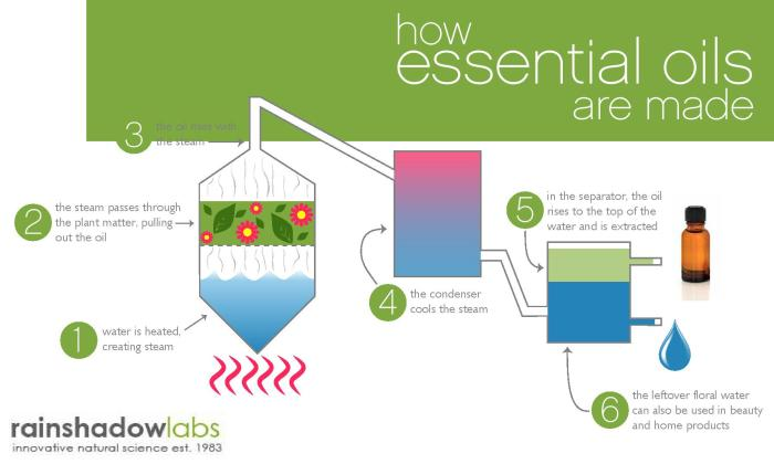 How Essential Oils are Made