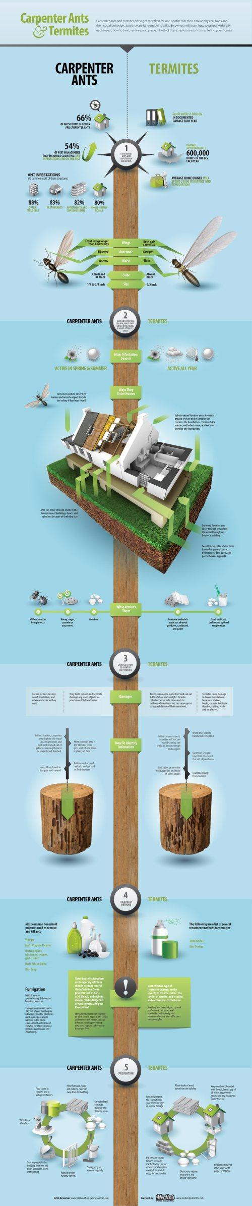 carpenter ants and termites